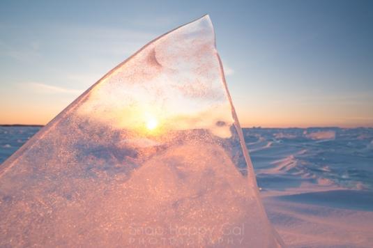 rose ice