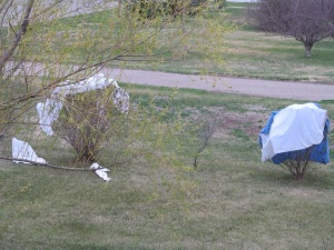 Covers blew off the lilac trees.