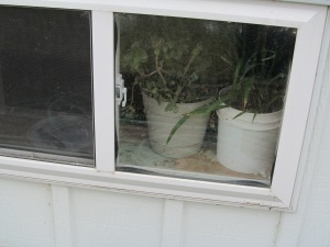 Last plants in the window.