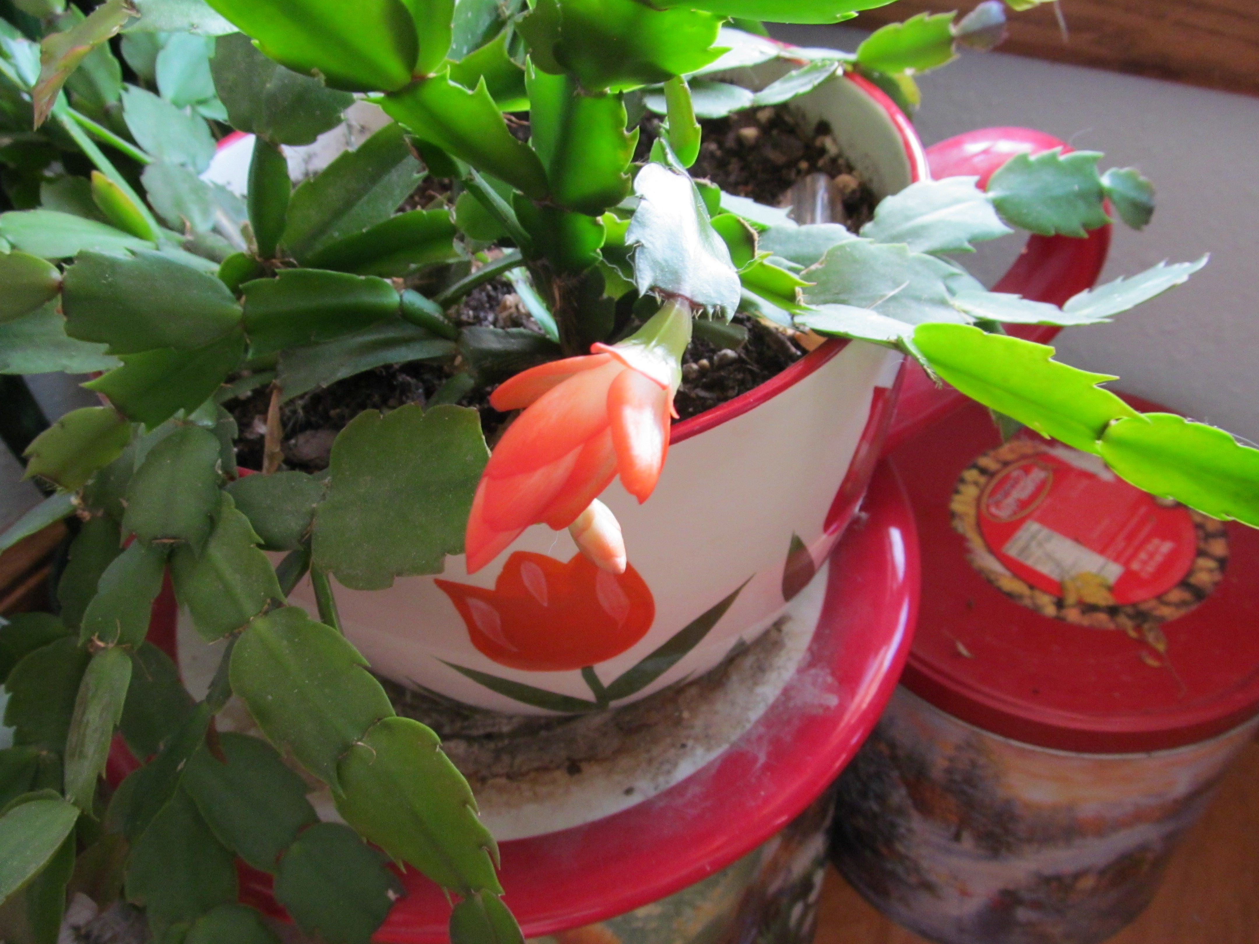 Indoor Plants Lucindalines