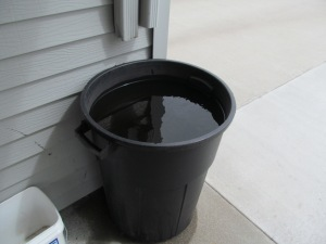 Rain barrel has finally filled up again.