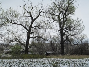 Trees across the dike. I took these pictures after lots of melting. I wanted to get that snow on the north side.