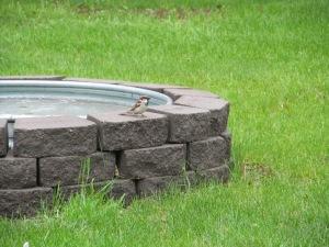 Birdee on the fountain.