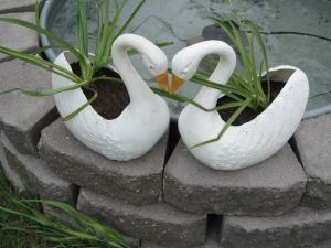 Spider plants in the swans.