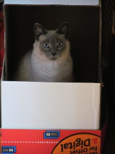 Roger in the box