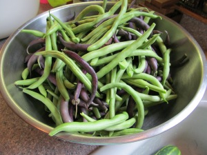 Beans ready to be blanched